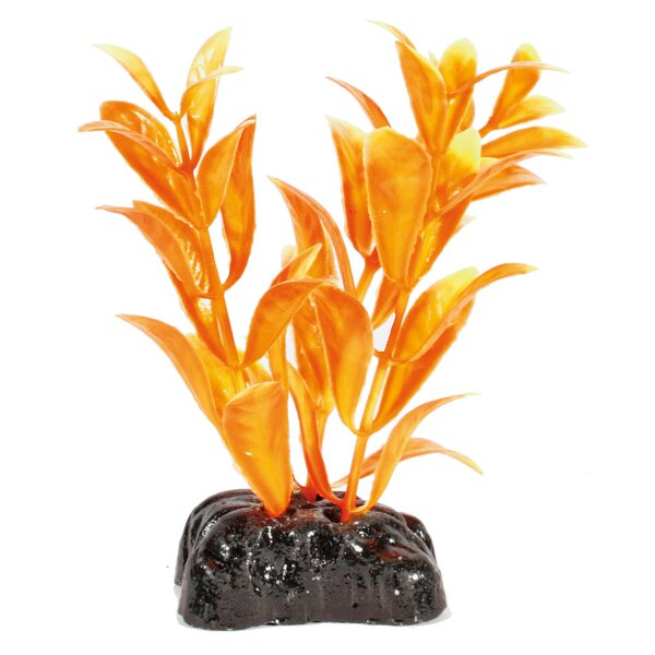Amazonas Fantasy Plant Nano orange