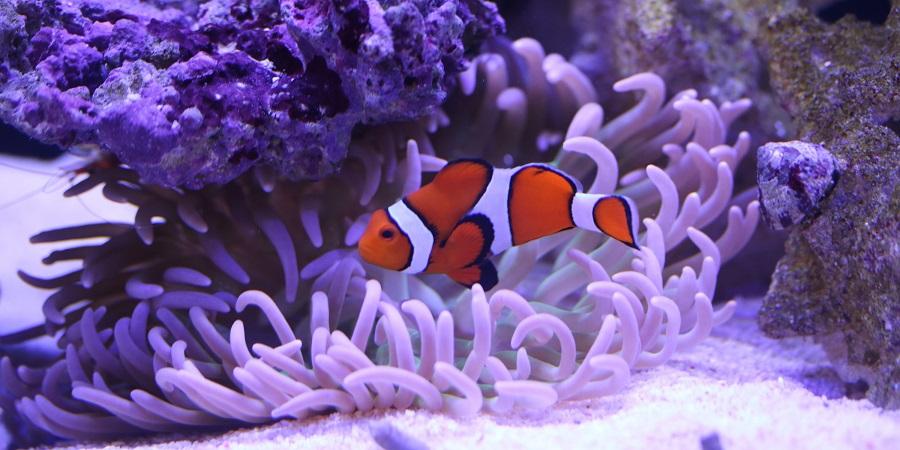 84 wohnzimmertisch schweiz wohnzimmertisch live for Aquarium wohnzimmertisch